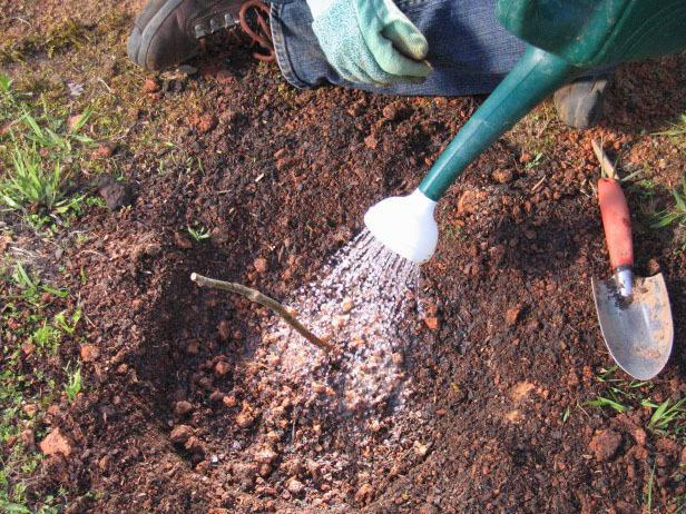 Уход садовода за растением
