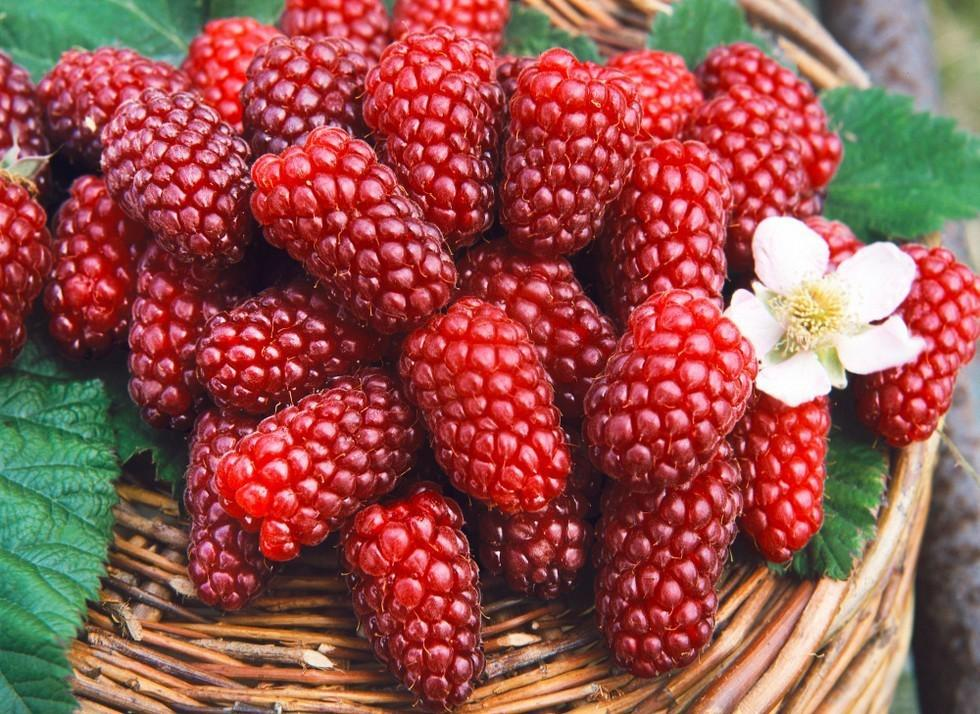 Как выглядят плоды