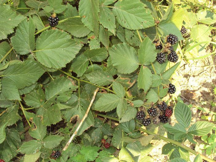 Заболевание ягодного кустарника