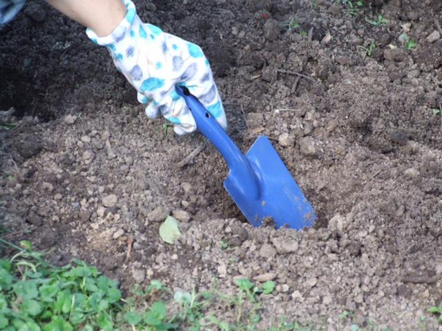 лопаточкой в саду