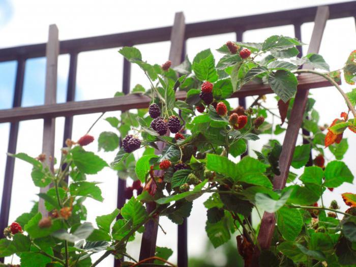 Профилактика растения