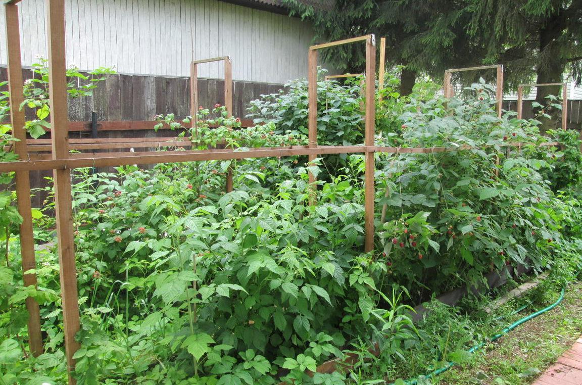 Шпалер для садового участка