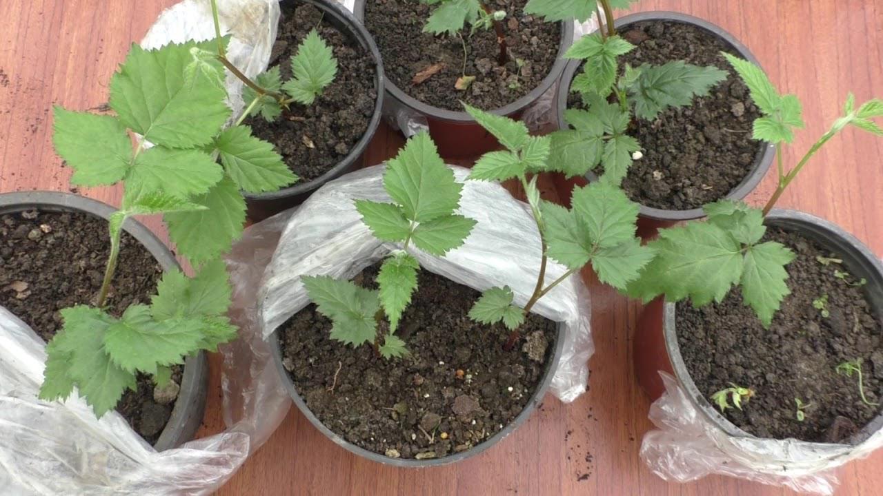 Покупка растения