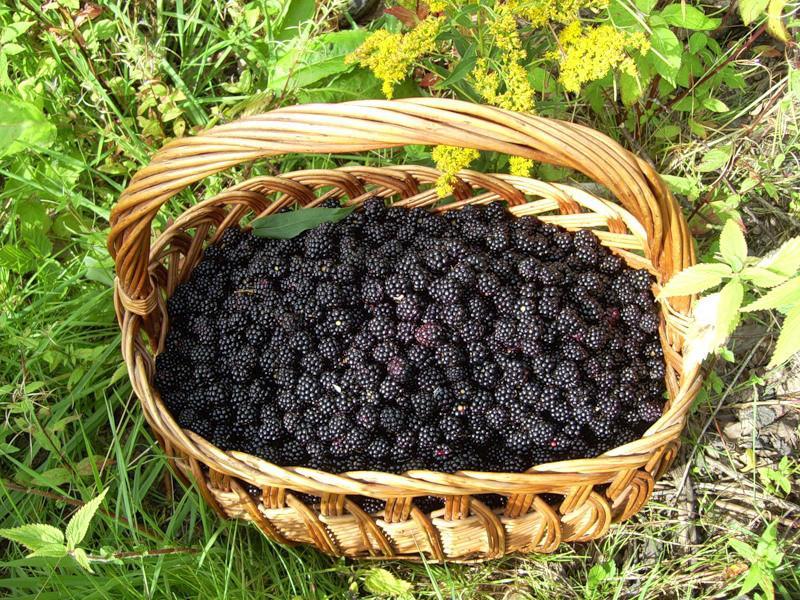 Какой урожай у садоводов любителей