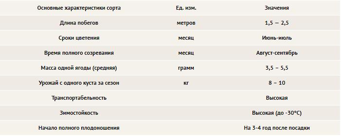 таблица сортов ежевики торнлесс