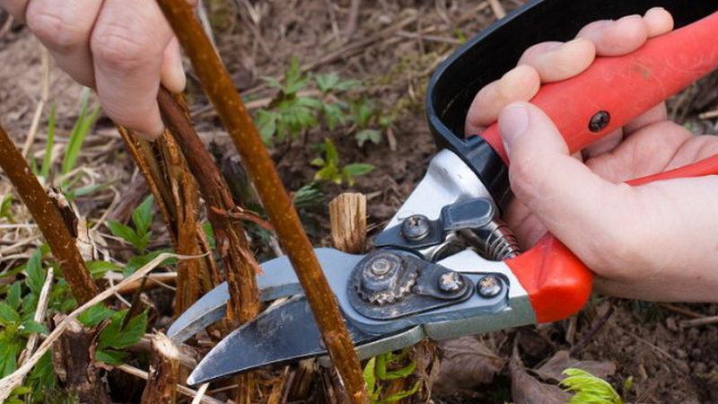 подготовка растения к холодам