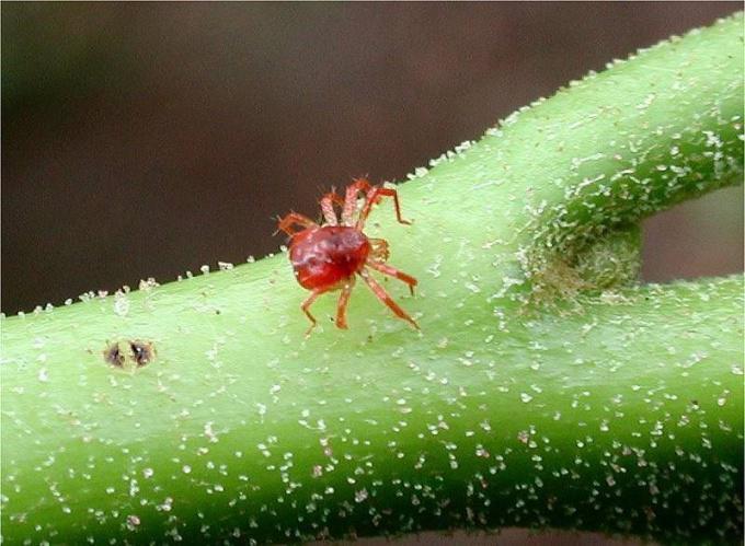насекомое на стебле