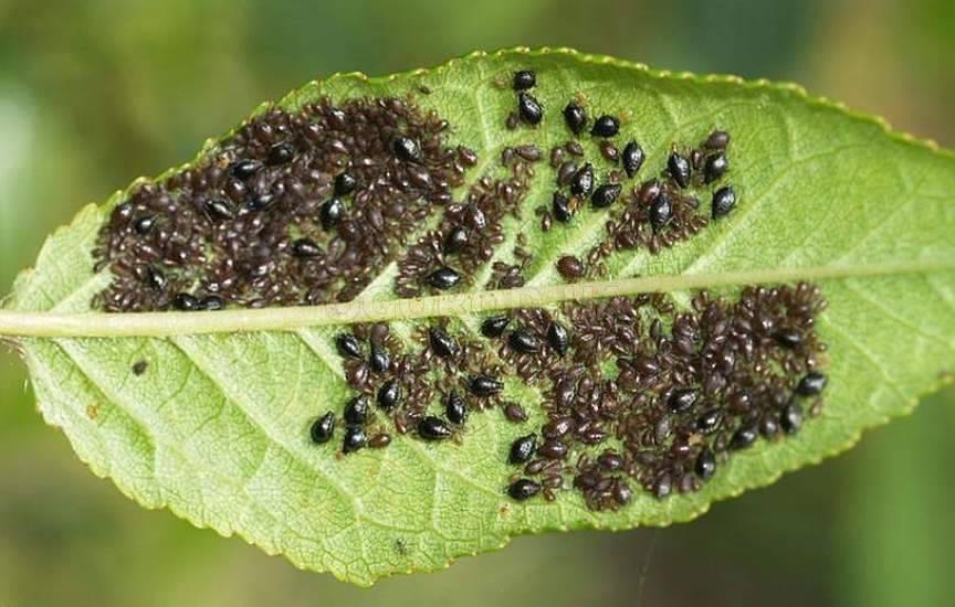 Как вредители портят листья