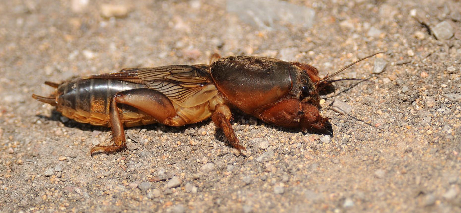Как бороться с жуками в огороде