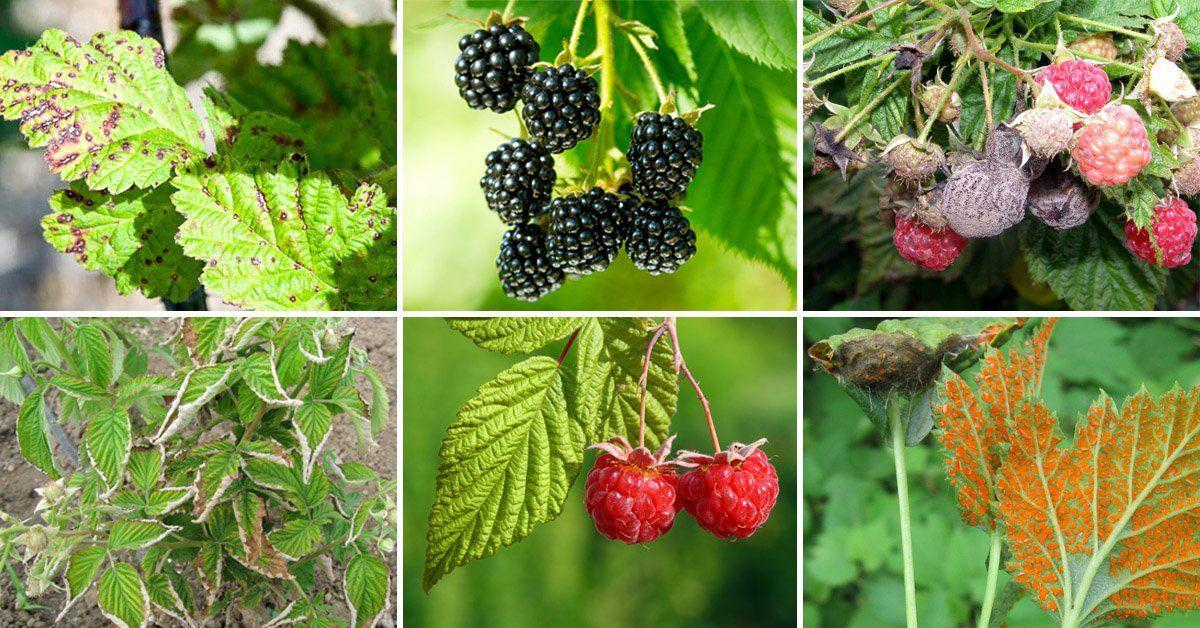 Заболевания растений в саду