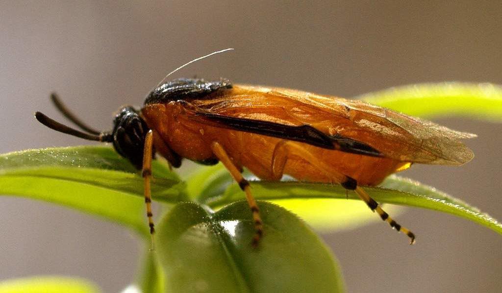 вредоностные насекомые в саду